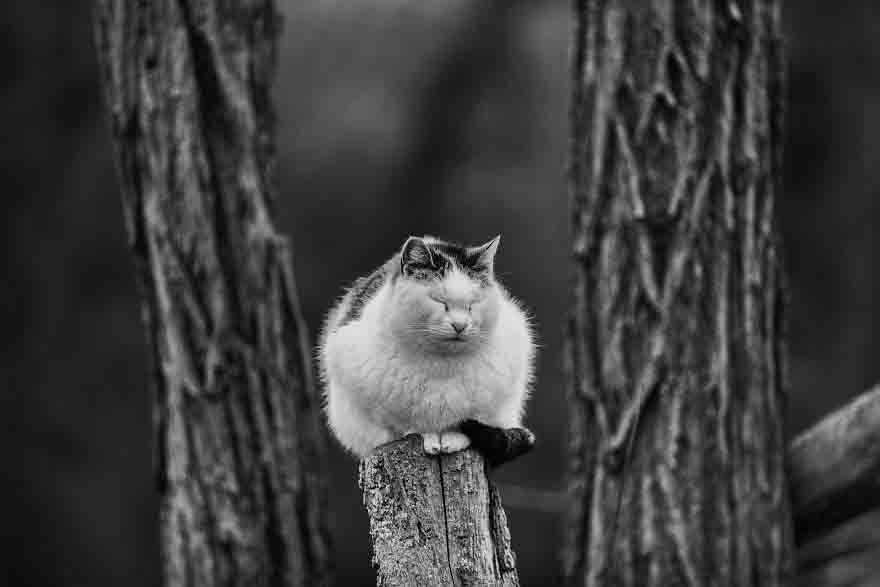 Fotógrafa registra gatinhos equilibristas curiosidades