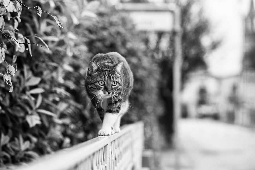 Fotógrafa registra gatinhos equilibristas imagens