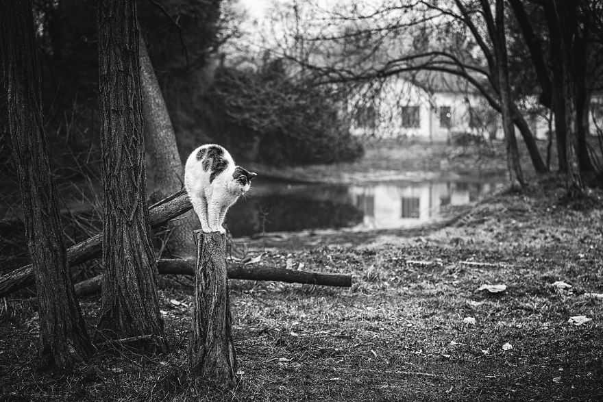 Fotógrafa registra gatinhos equilibristas maiores