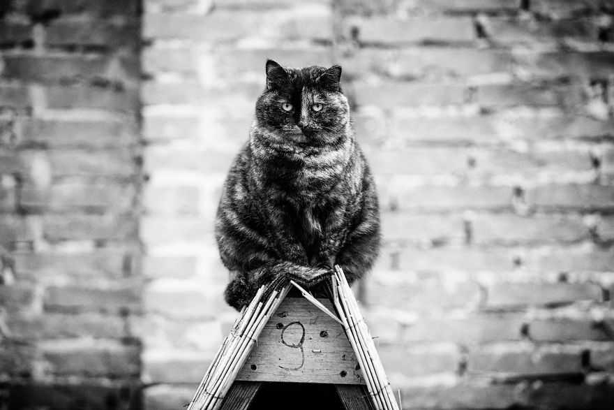 Fotógrafa registra gatinhos equilibristas melhores