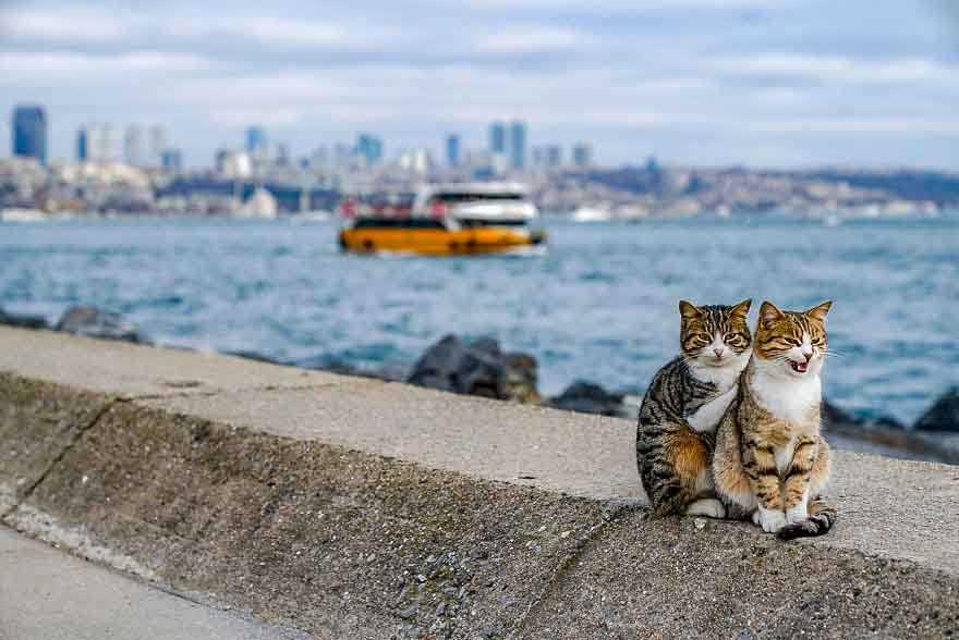 Fotógrafo flagrou gatinhos