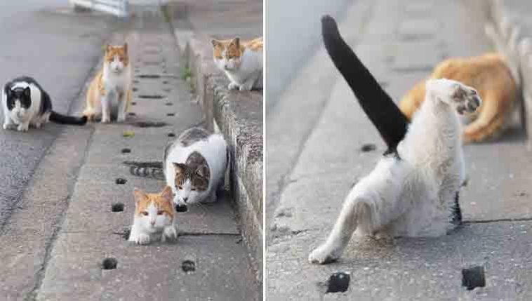 Fotógrafo registra gatinhos de rua 1