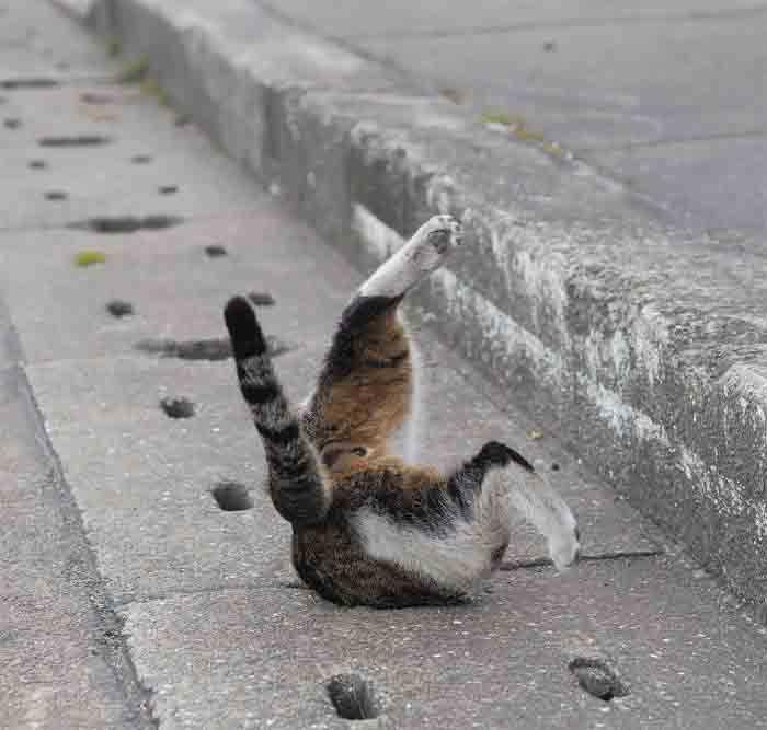 Fotógrafo registra gatinhos de rua engraçado