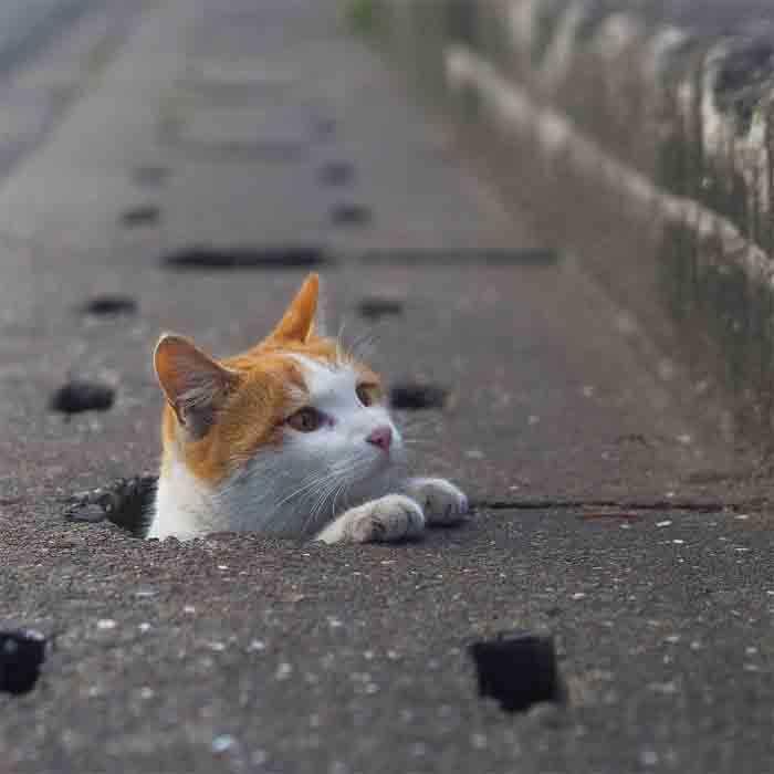 Fotógrafo registra gatinhos de rua galeria