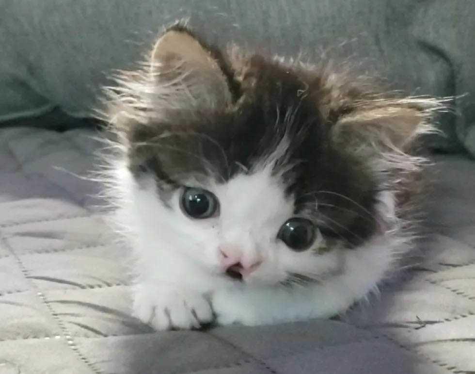Gatinha com o rosto mais doce do mundo