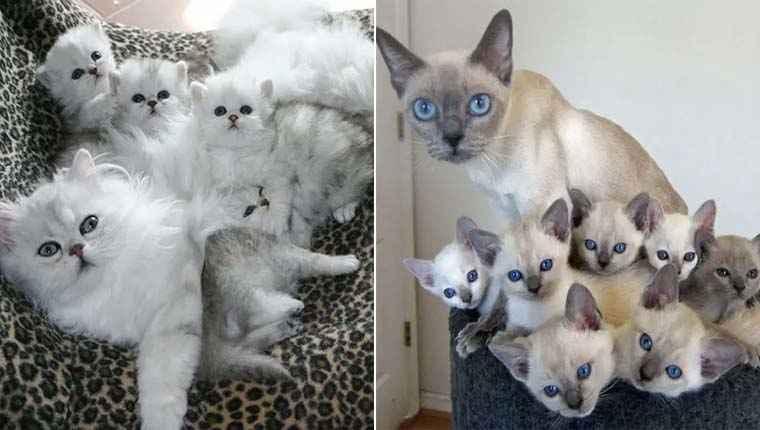 Gatinhas e filhotes
