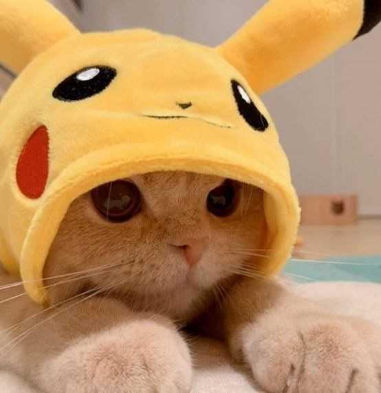 Gatinho vestido de Pikachu 1