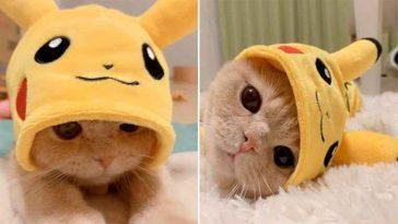 Gatinho Pikachu a coisa mais fofa do mundo
