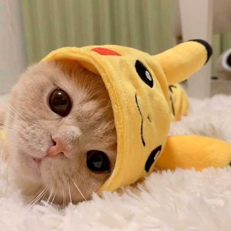 Gatinho vestido de Pikachu fotos