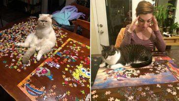 Gatinhos e quebra-cabeças humor