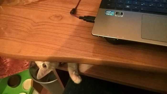 Gatinhos são os predadores desde sempre