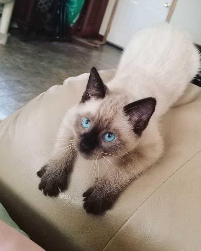 Gatinhos são os predadores lindos