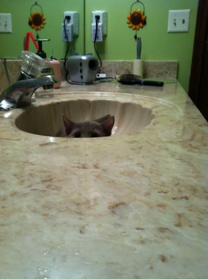 Gatinhos são os predadores mais fofos