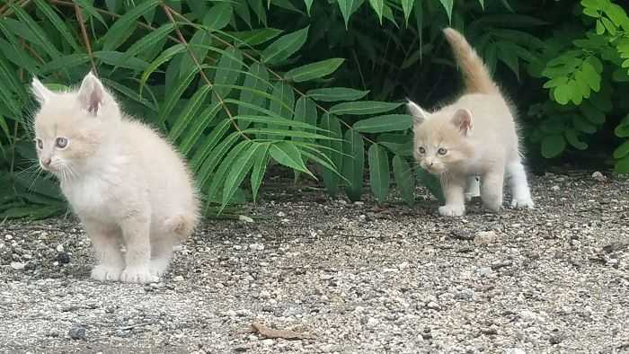 Gatinhos são os predadores naturais