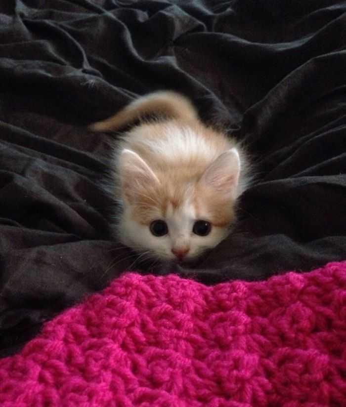 Gatinhos são os predadores perfeitos