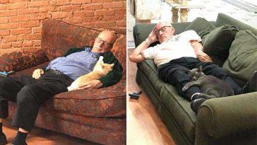 Idoso voluntário e gatinhos abrigo