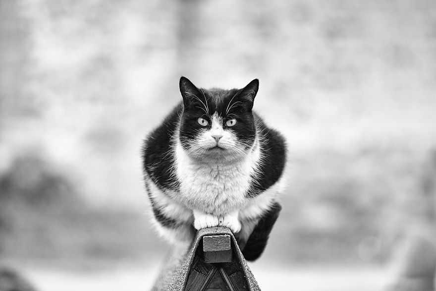 Imagens fotógrafa registra gatinhos equilibristas