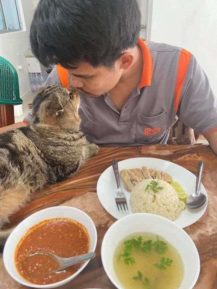 Mulher registra o gatinho marido