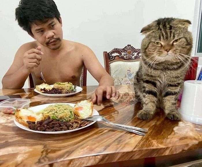 Mulher registra o gatinho que rouba o marido