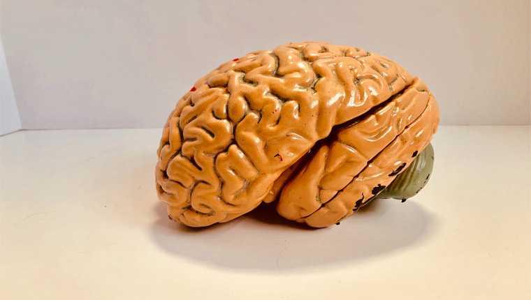 amebas comedoras de cérebro curiosidades assustadoras