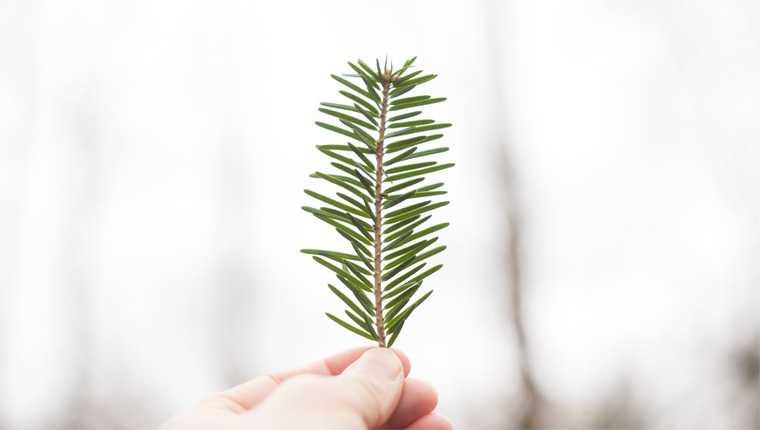 árvore crescendo no pulmão
