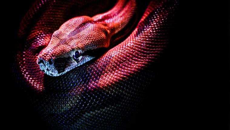 cobras mais bonitas do mundo