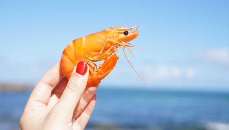 coração do camarão fica na cabeça