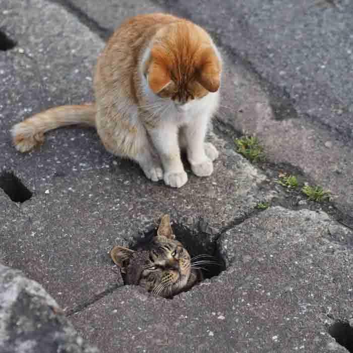 curiosidades gatos brincando