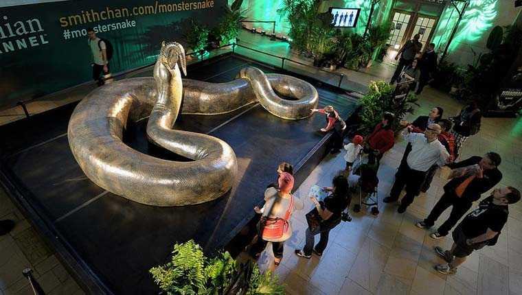 curiosidades sobre cobras titanoboa