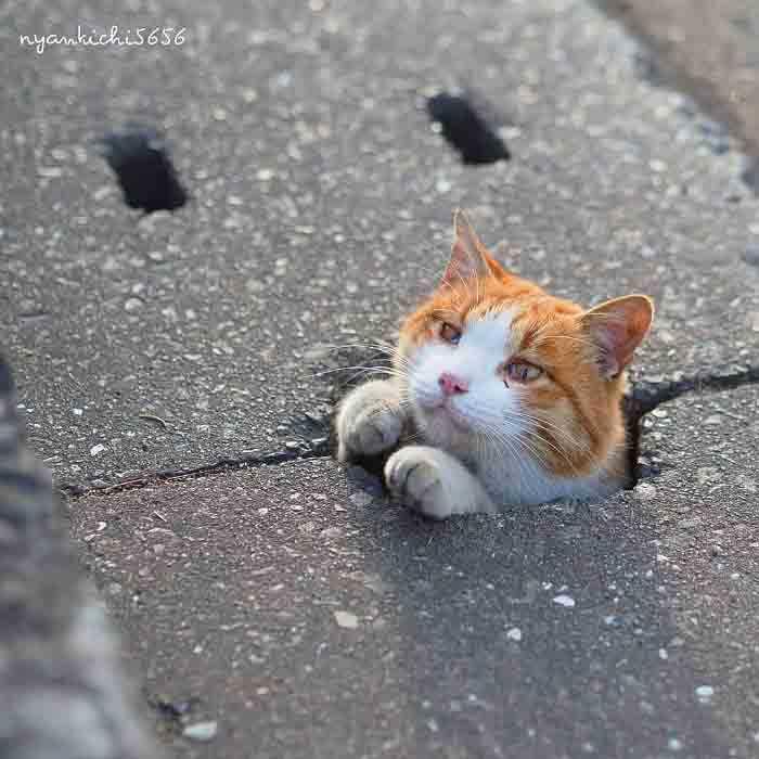 Fotógrafo registra gatinhos de rua curiosidades