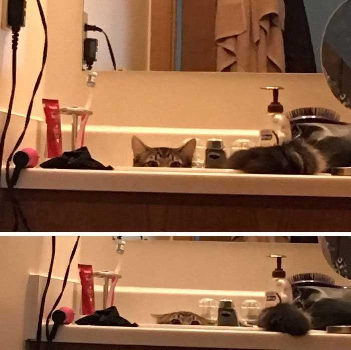 esconderijo gato
