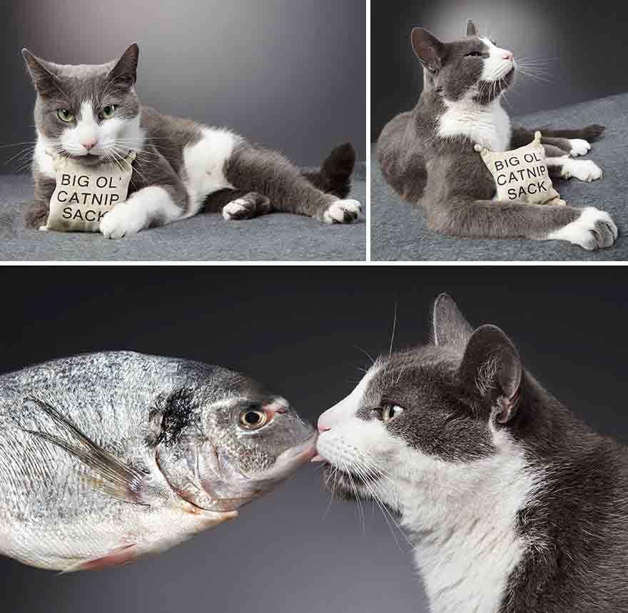 estúdio de fotografia gatos