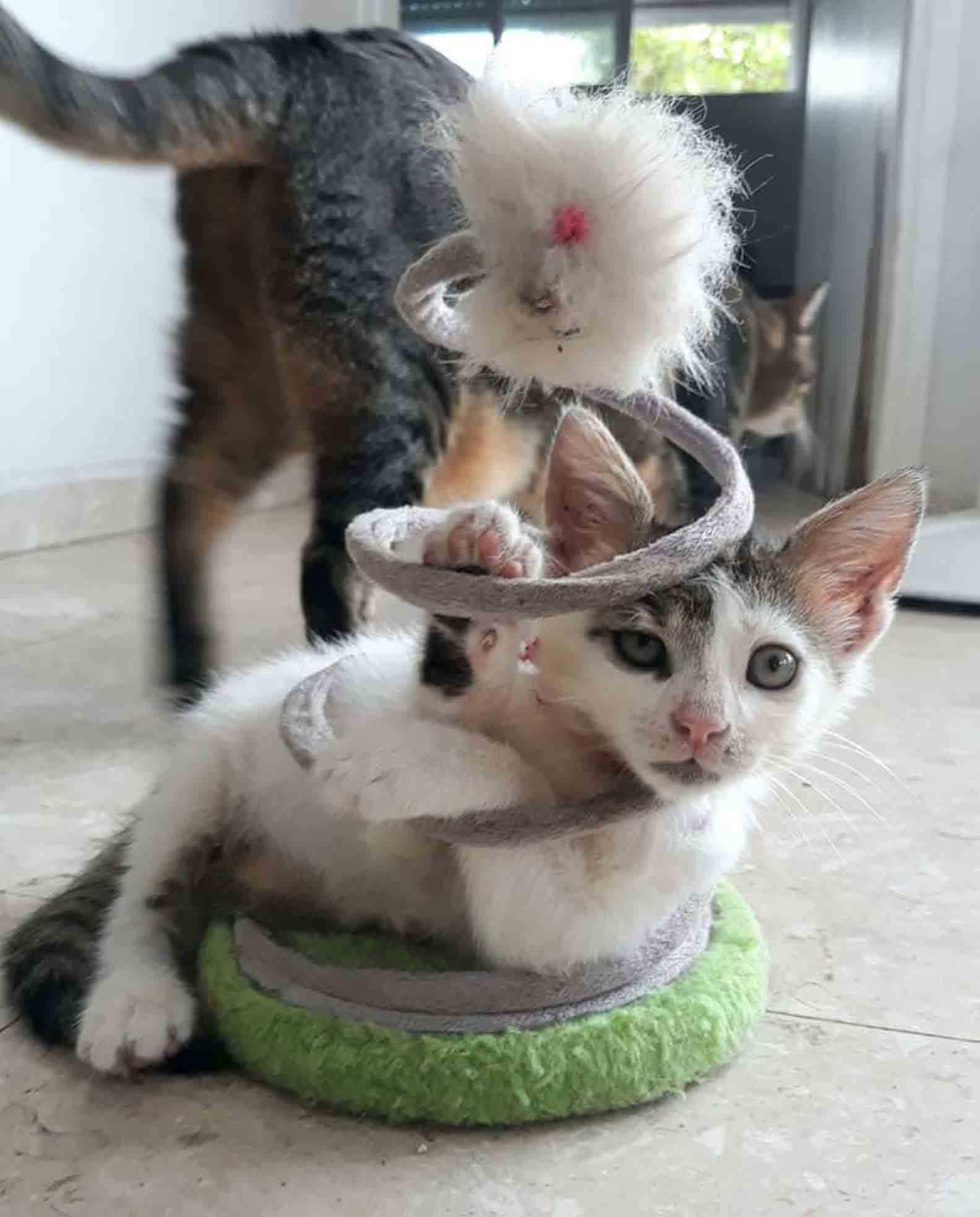 filhotes engraçados fofos