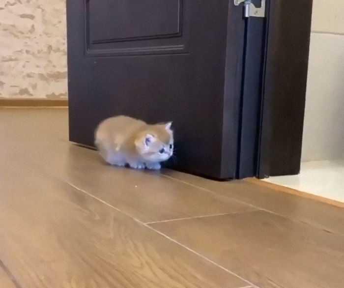 fofura gato