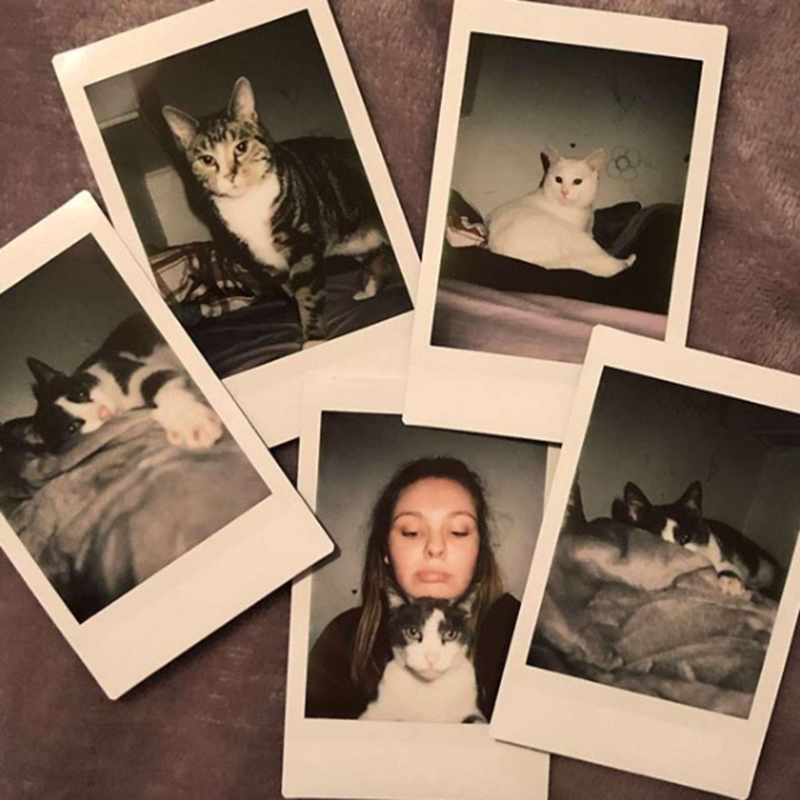 fotos com gatos