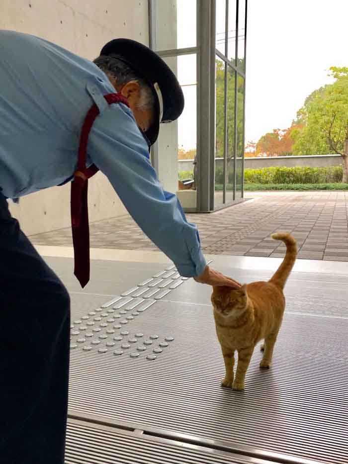 fotos de gatinho