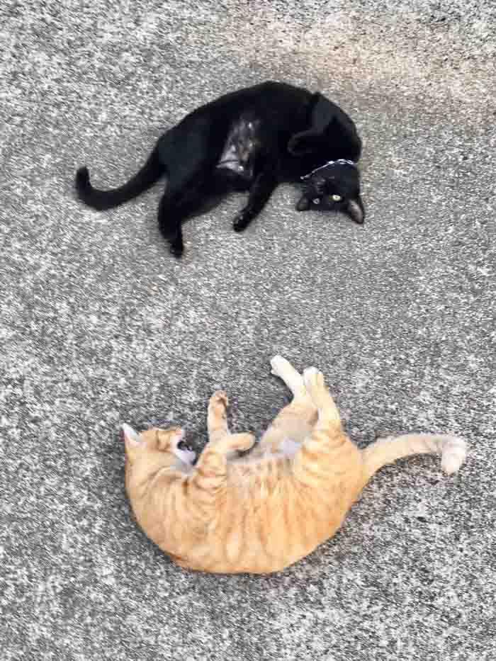 fotos dupla de gatinhos