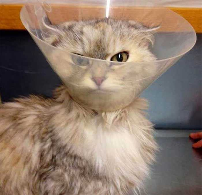 fotos hilárias de gatos