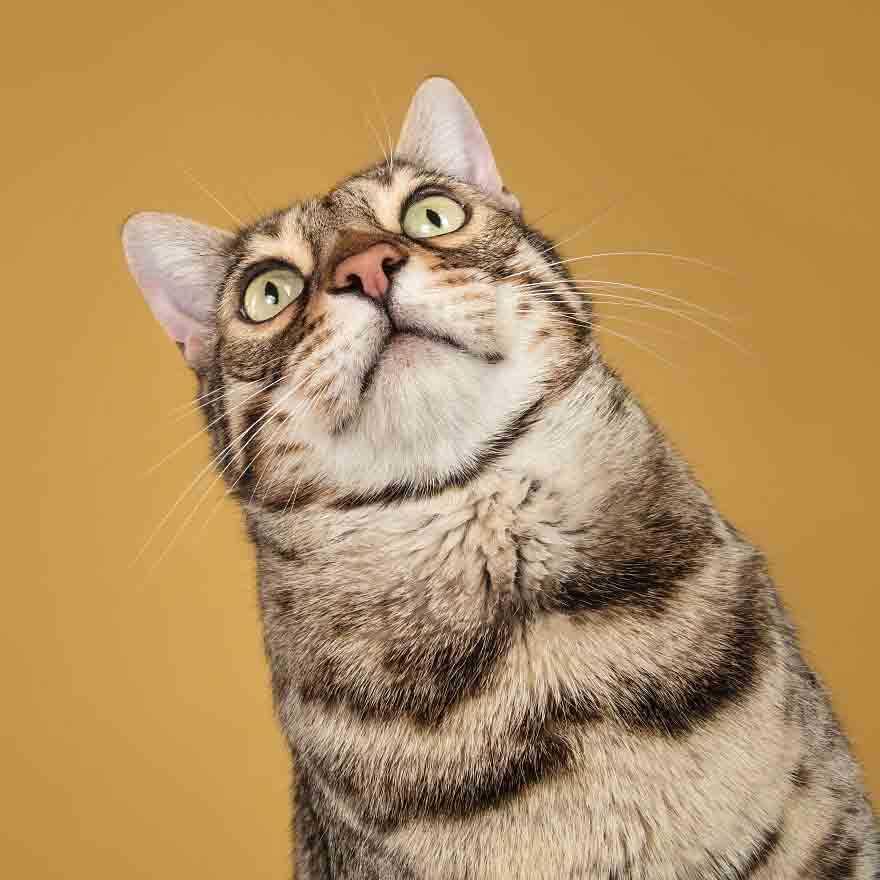 fotos perfeitas gatos
