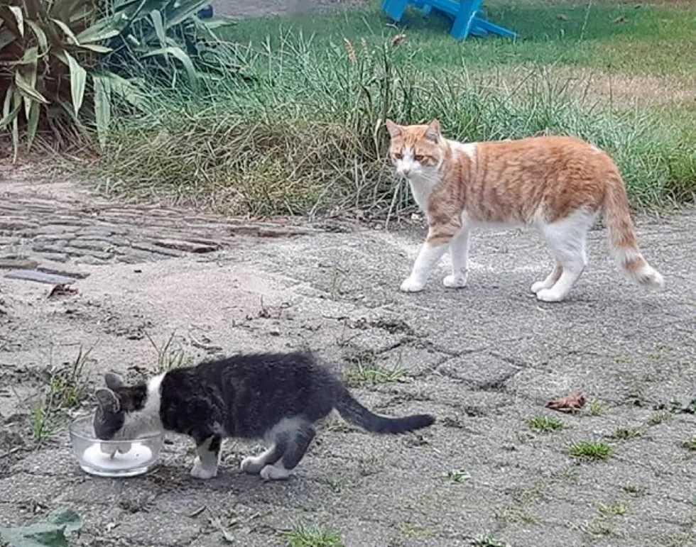 gatinho faz amizade com filhote abandonado