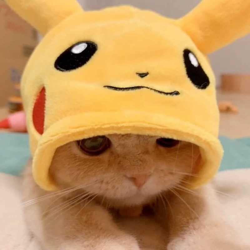 gatinho pikachu fotos