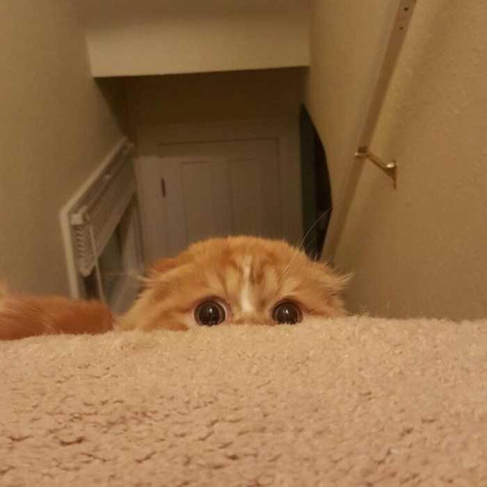 gatinho prepara ataque