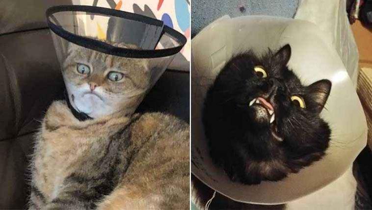 gatinhos com cone da vergonha