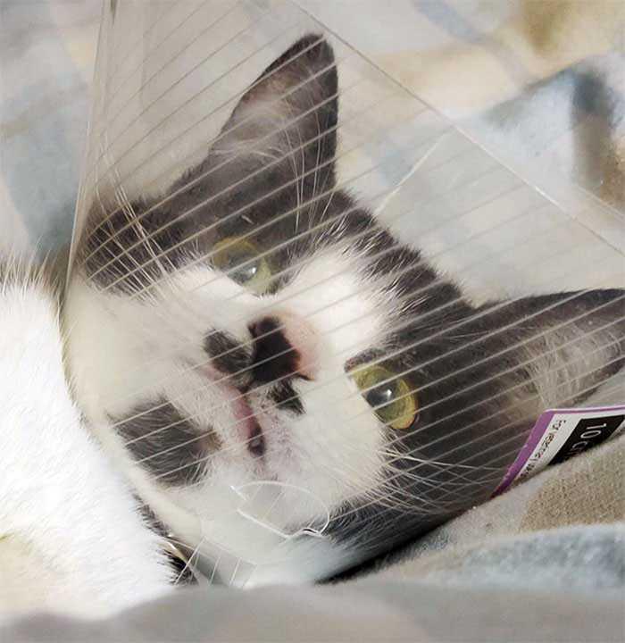 gatinhos com cone da vergonha hilários