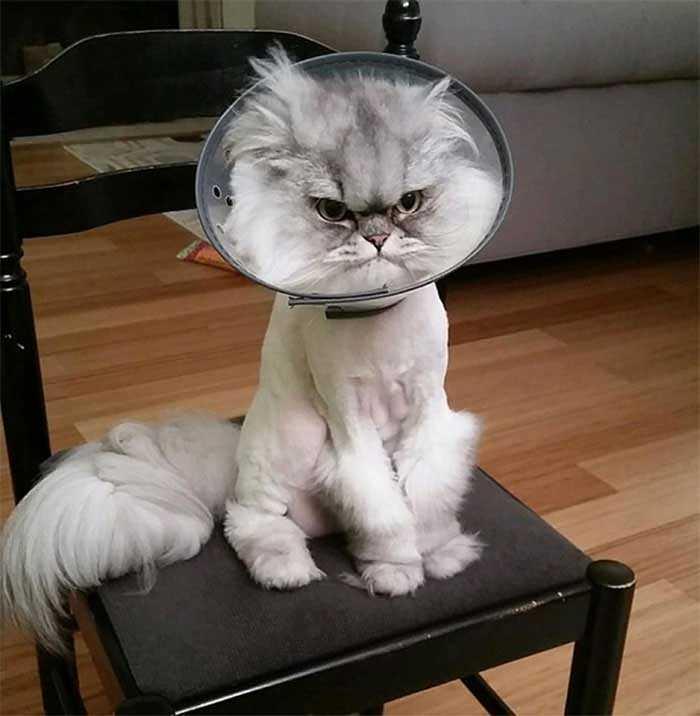 gatinhos mais engraçados