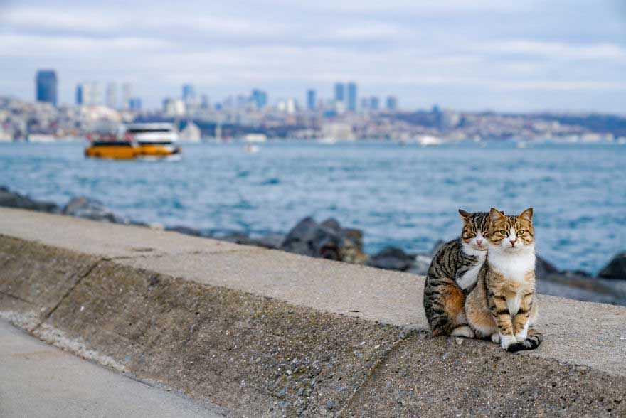 gatinhos se abraçando