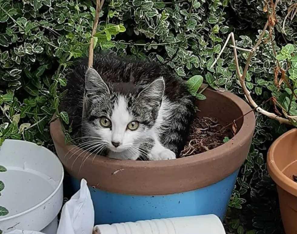 gato de rua