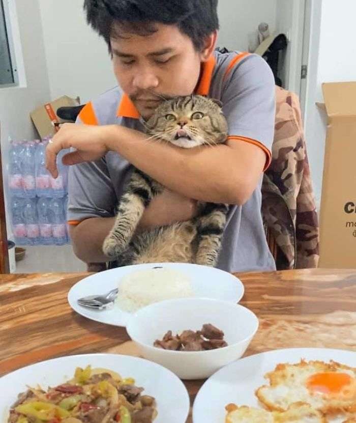 gato roubou o marido