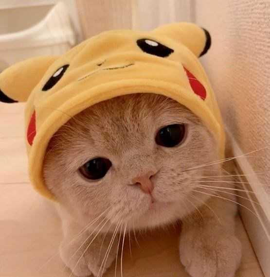 gato vestido de Pikachu