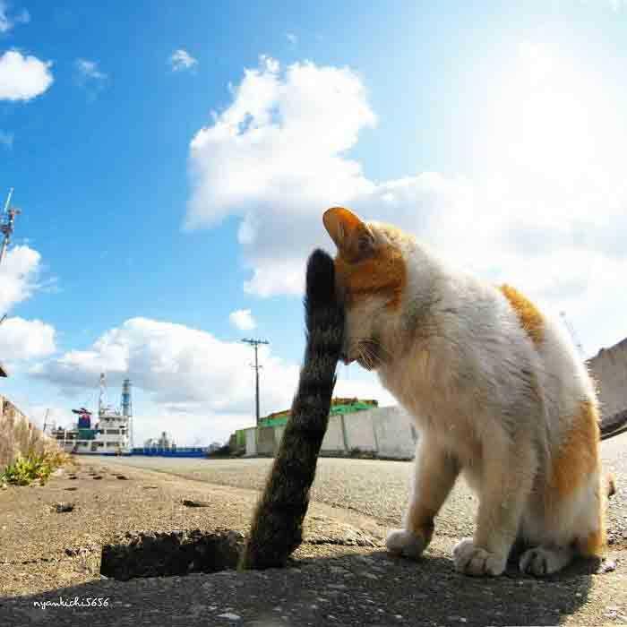 gatos abandonados Japão